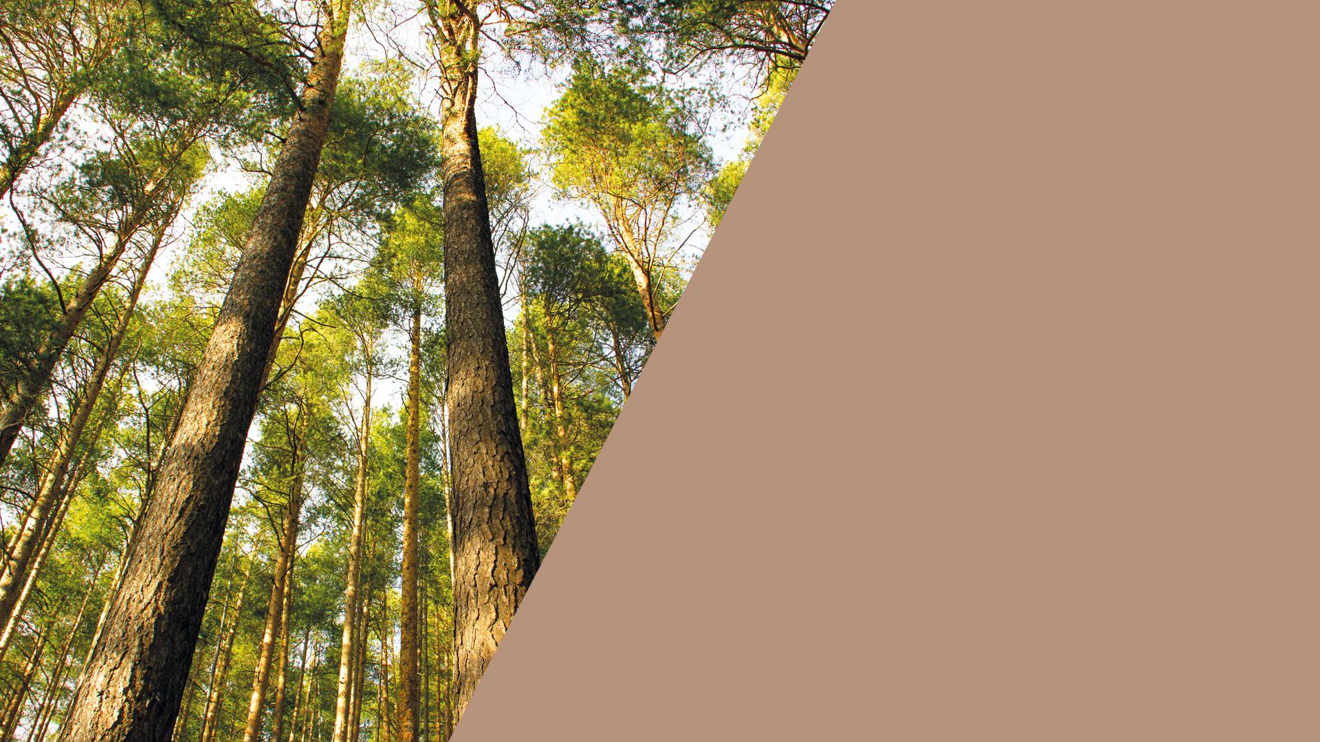 Batipac produit écoresponsable carton construction accueil mieux être planète